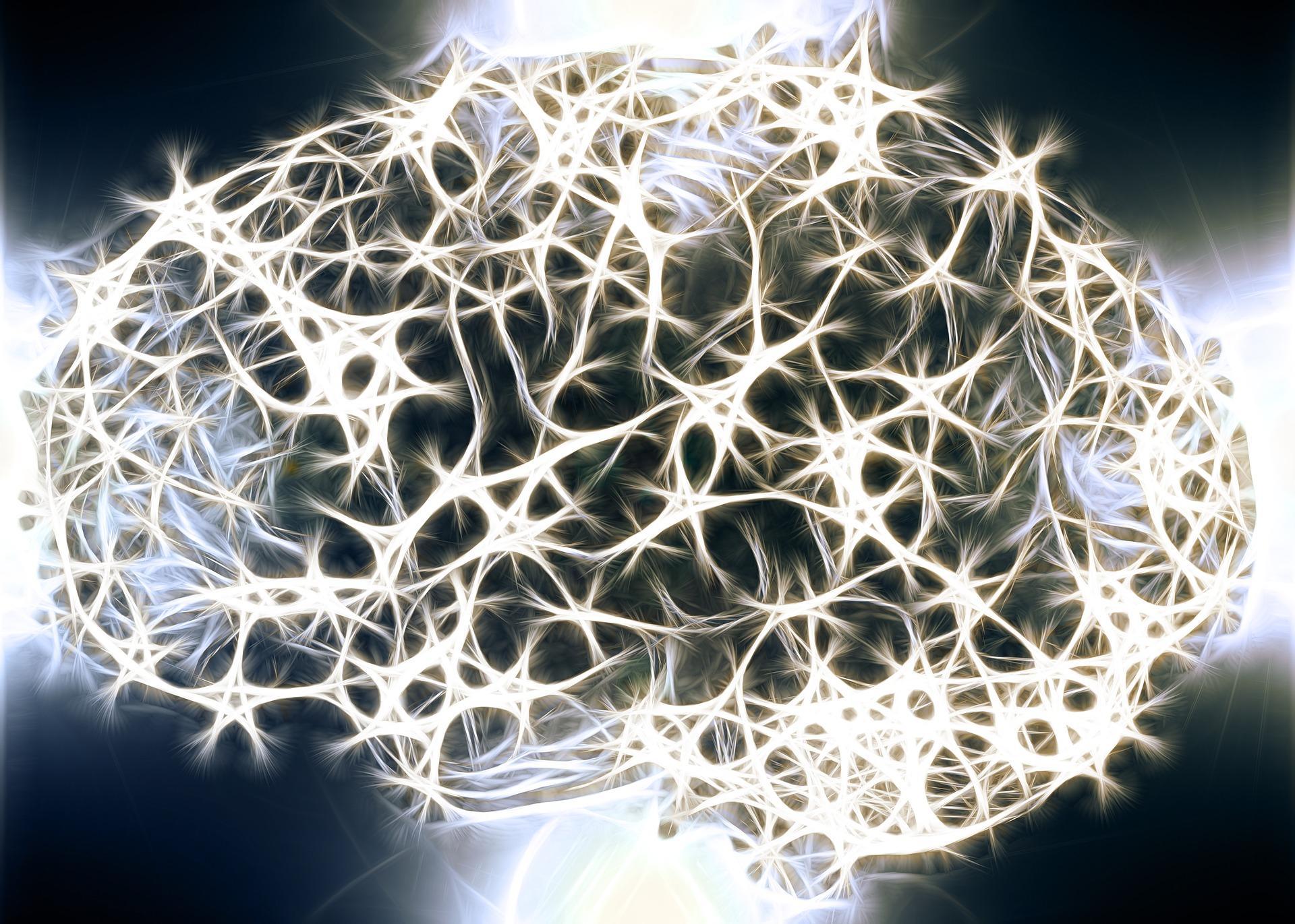 Mitokondriaalinen Periytyminen